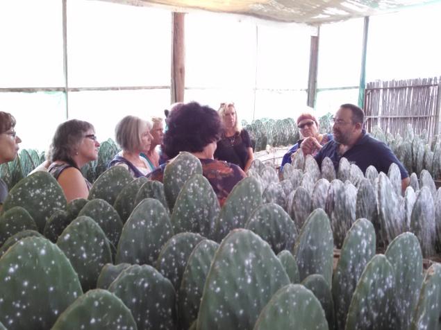 www.kathievezzani.com;http://www.tripadvisor.com/Attraction_Review-g150801-d634805-Reviews-Tlapanochestli-Oaxaca_Southern_Mexico.html